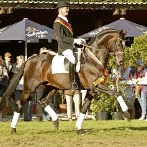 sir donnerhall -semental- recomendado-por-equustallions-de-shockemhole-helgstrand