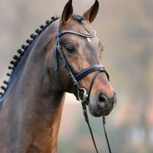 -semental- recomendado-por-equustallions- de- shockemhole-helgstrand