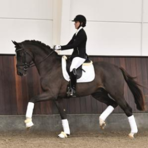 diamancio -semental- recomendado-por-equustallions- de- shockemhole-helgstrand